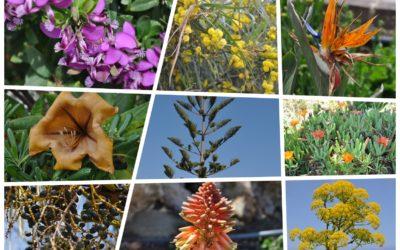 Maltańska roślinność